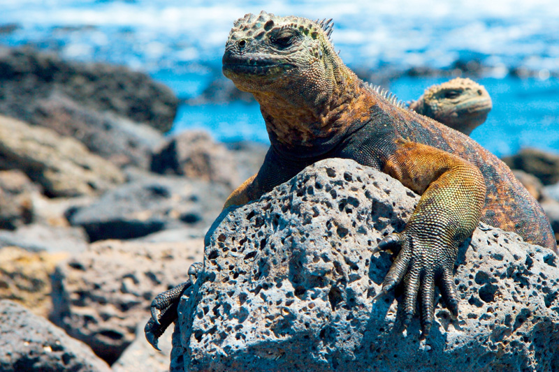 Galapagos | Rejse | Ecuador | Opdag Verden